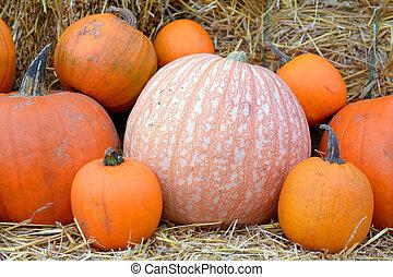 some pumpkins