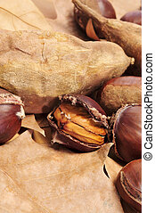 some roasted chestnuts and sweet potatoes, typical snack in All Saints Day in Catalonia, Spain