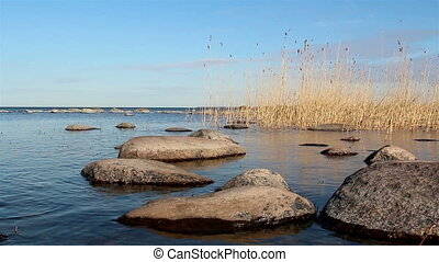 Some rocks and reeds on the water