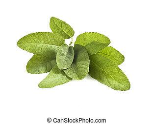 sage - some sage leaves on white background