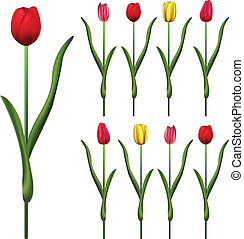Some Tulips - Vector of Tulips