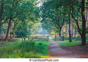 someren, 道, netherlands, 森林, フェンス