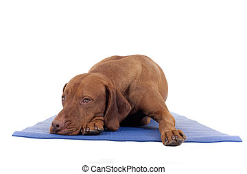 sometimes you need to rest - dog resting on yoga mat ...
