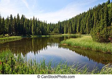 sommar, alpin insjö, skog