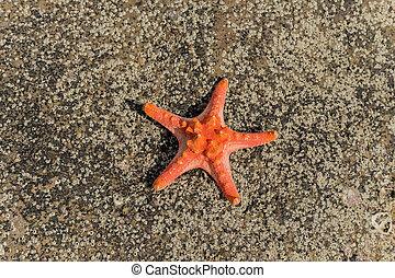 sommar, bakgrund, med, röd, sjöstjärna, på, hav, tropisk, sand strand