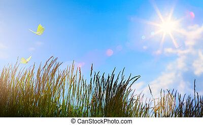 sommar, blomma, sommartid, abstrakt, -, fält, bakgrund