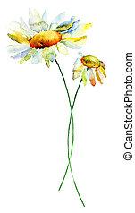 sommar, Blomstrar, Kamomill