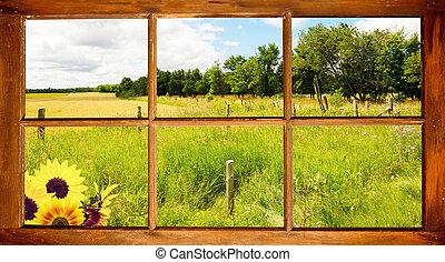 sommar, fält, utsikt.