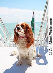 sommar ferier, hund, skepp, resa, båt