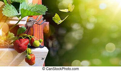 sommar frukt, background;, färskt smultron, på, a, grön, trädgård, bakgrund