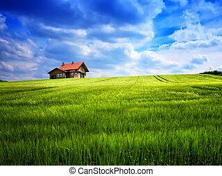 sommar, grönt kulle, hus