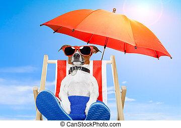 sommar, hund, semester, helgdag