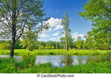 sommar, landskap, med, ensam, träd, och blåa, sky