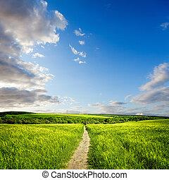 sommar, landskap, med, grön äng, och, sädesslag