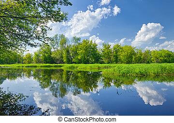sommar, landskap, med, narew, flod, och, skyn, på, den,...