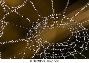 sommar, morgon, dagg, på, spindel nät, med, soluppgång, refraktion, och, suddig fond