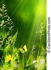 sommar, natur, abstrakt, grön fond, blommig