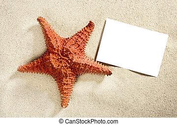 sommar, sjöstjärna, semester, sand tidning, tom, strand