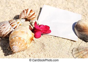 sommar, sjöstjärna, skalen, sand tidning, tom, strand