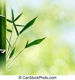 sommar, skönhet, abstrakt, bakgrunder, bokeh, orientalisk, bambu, gräs