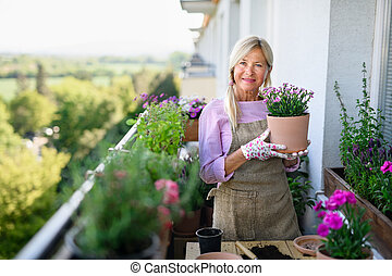 sommar, trädgårdsarbete, flowers., balkong, kvinna, plantande, senior