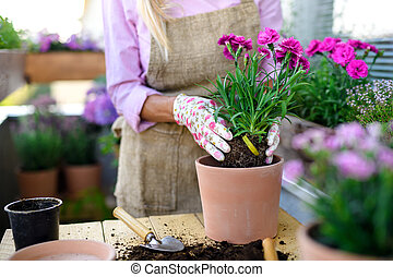 sommar, trädgårdsarbete, flowers., senior, unrecognizable, kvinna, plantande, balkong