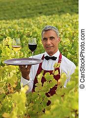 Sommelier in a vineyard