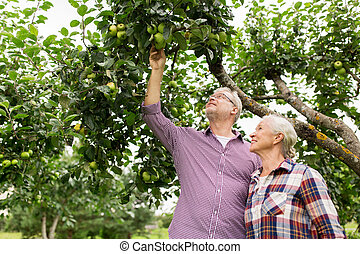 sommer, apfel, paar, baum, älter, kleingarten