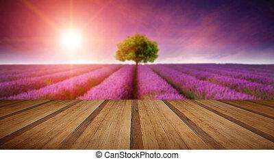 sommer, baum, lavendel, betäuben, feld, ledig, sonnenuntergang, landschaftsbild