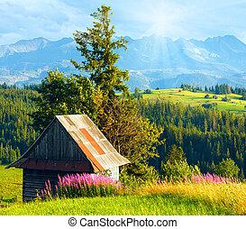 sommer, berg, land, sonnenschein, feld, oben