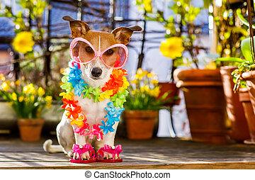 sommer, Feiertag, Balkon, hund, urlaub