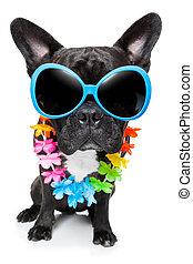 sommer, Feiertag, hund
