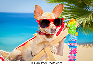 sommer, Feiertag, hund, urlaub
