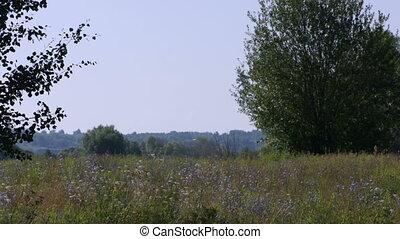 sommer, feld, und, bäume, szenische ansicht