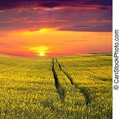 sommer, gelbes feld, flowers., sonnenuntergang, ...