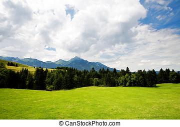 sommer, græs, skov, dal, during