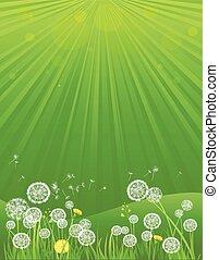 sommer, grüner hintergrund