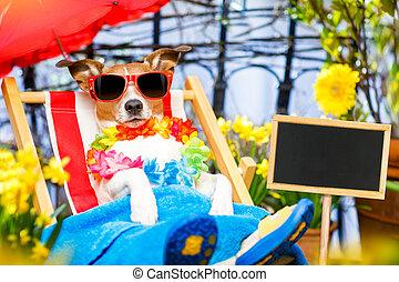 sommer, hängemattte, Feiertag, hund, urlaub