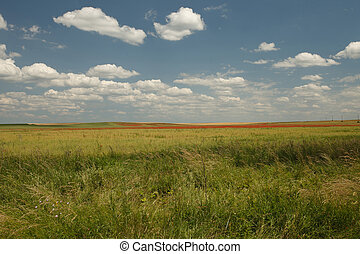 sommer, himmelsfeld, grüner hintergrund, mohnblumen, wildes gras