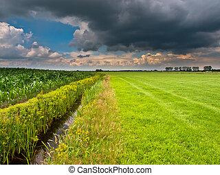 sommer, himmelsgewölbe, brütende , oben, niederländisch, landwirtschaftlich, landschaftsbild