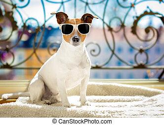 sommer, hund, balkon