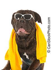 sommer, hund