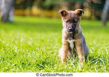 sommer, junger hund, park, grün, porträt, gras, tag