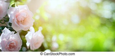 sommer, kunst, forår, abstrakt, baggrund, blomstrede, eller