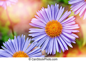 sommer, landschaft., bunte, blaues, gänseblumen, blumen
