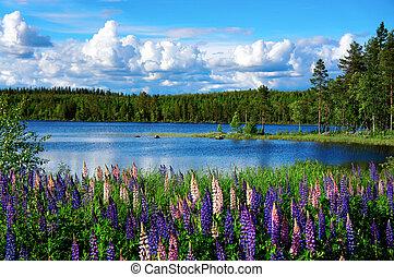 sommer, landschaftsbild, skandinavisch