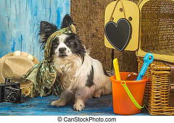 sommer, lustiges, hund, Urlaube