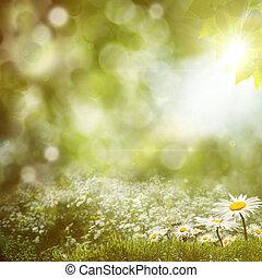 sommer, mittag, hintergruende, mit, schoenheit, gänseblumen, blumen