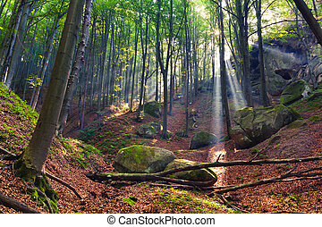 sommer, morgen, in, mystisch, wälder
