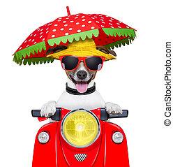 sommer, motorrad, hund